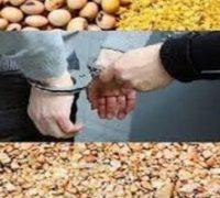 ۵ تن دانه مرغ قاچاق در حاجی آباد کشف شد